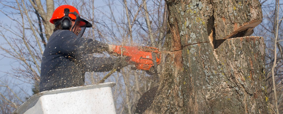 Tree Management Landscaping And Lawn Care Services